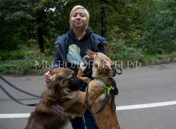 Собака Таганка и ее щенки, родившиеся в метро. Прошел год…
