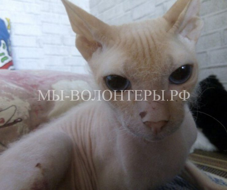 Волонтеры спасли и восстанавливают избитого котенка