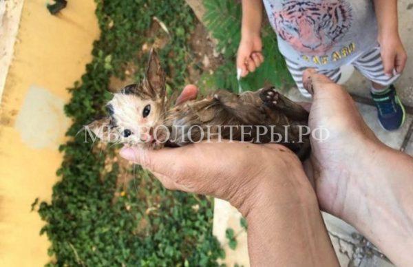 Спасение котенка, тонущего в сточной канаве