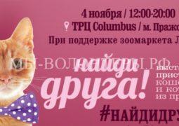 4 и 11 ноября пройдут семейные мероприятия по пристройству животных из приютов