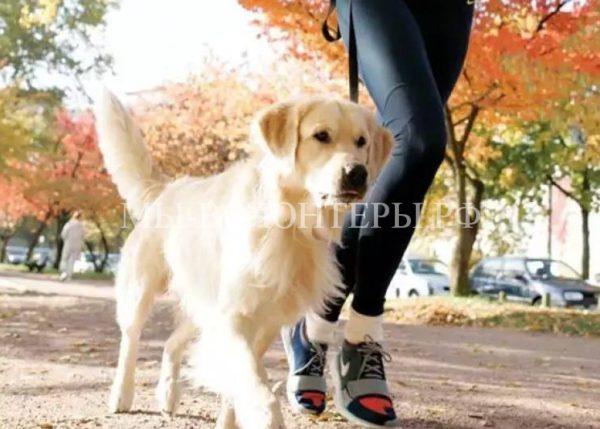 21 октября впарке «Кузьминки» пройдет пятикилометровый благотворительный «Пушистый забег»