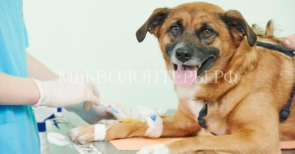 Предполагается создание реестра недобросовестных ветеринарных клиник