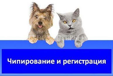Планируется внести законопроект о платной регистрации домашних животных