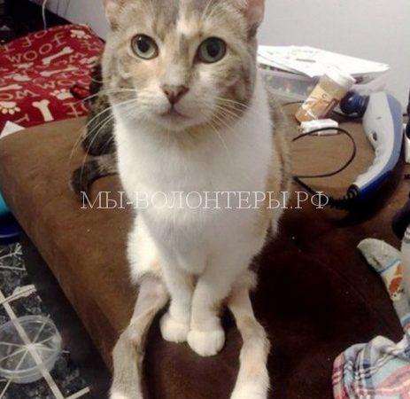 Волонтеры спасли кошку со сросшимися суставами  и забрали ее домой