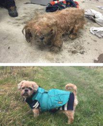 Собаку бросили на улице в ужасающем состоянии. Но ее спасли и нашли ей дом