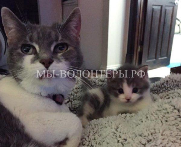 Старая кошка подарила родительскую заботу маленькому найденышу