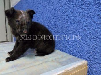 Пострадавший от подростков-живодеров щенок выжил и идет на поправку