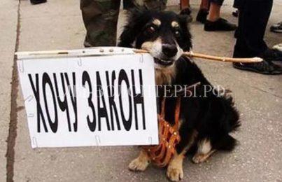С.Миронов предложил принять закон о животных без нормы о порядке их регистрации