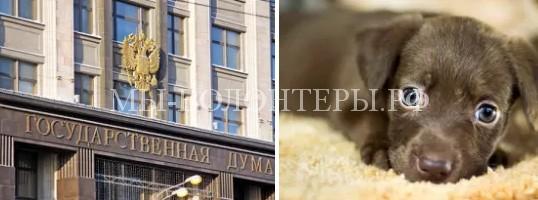 Госдума в первом чтении приняла поправки об ужесточении уголовного наказания за жестокое обращение с животными