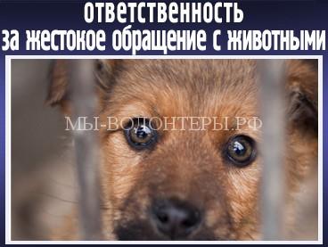 22 ноября «Единая Россия» в Госдуме поддержит в первом чтении законопроект, усиливающий ответственность за жестокое обращение с животными