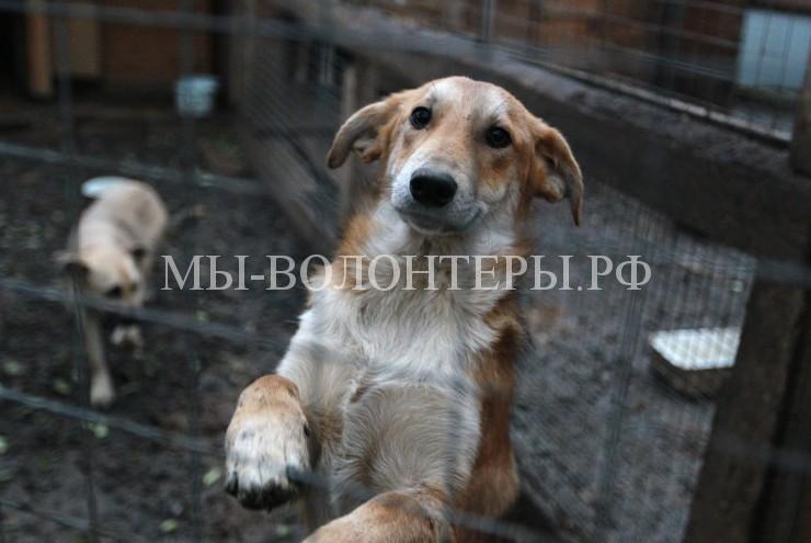 В Госдуме опровергли информацию о введении налога на животных