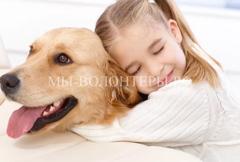 Исследования показали: люди переживают за собак больше, чем за себе подобных