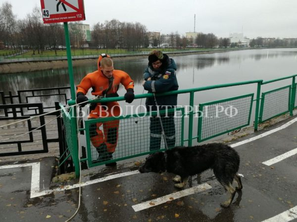 Спасатели вытащили из водоема тонущую овчарку и спасли в метро упавшего на рельсы котенка