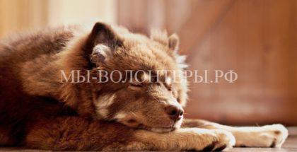 «Язык» животных — что означают позы для сна и игр у собак