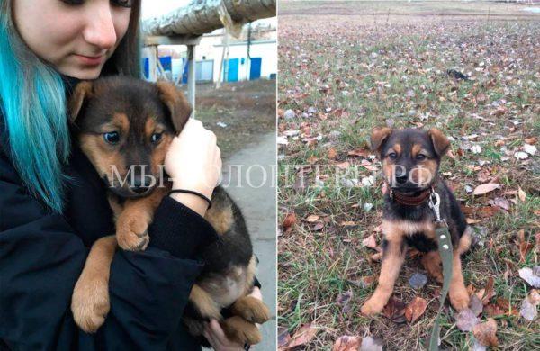Ищет дом чудесная щенок-девочка, 2-3 мес., г.Чапаевск, Самарская область