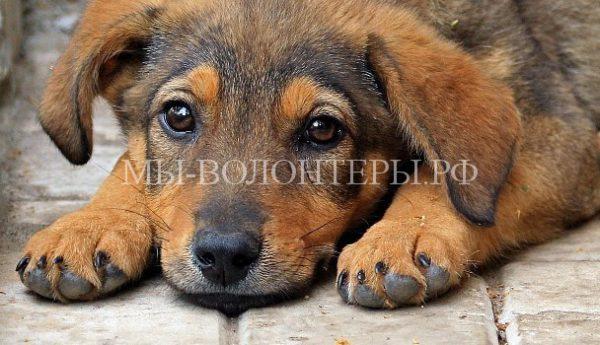 За убийство щенка в присутствии детей осужден житель Красноярска