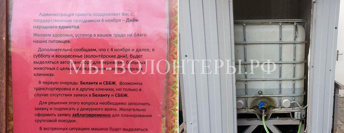 В приюте Щербинка организована доставка волонтеров с подопечными в клиники СББЖ и Беланта
