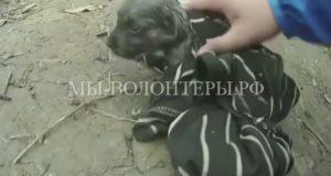 Велосипедист спас тонущего щенка, сделав ему искусственную вентиляцию легких
