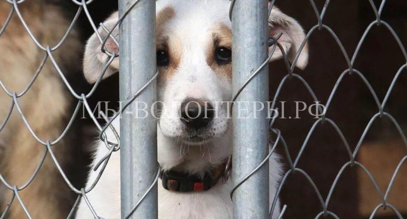 Госдума РФ приняла законопроект об ужесточении наказания за жестокое обращение с животными