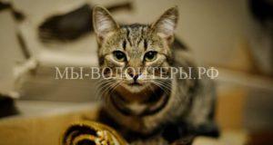 Жительница Гомеля 15 лет спасает котов со всей округи от холода, голода и людей
