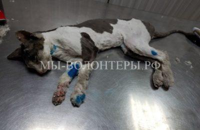 Жители спасли кошку, которая застряла в монтажной пене