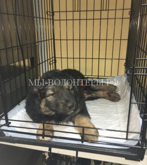 Жительница Волгограда спасла щенка, попавшего под поезд