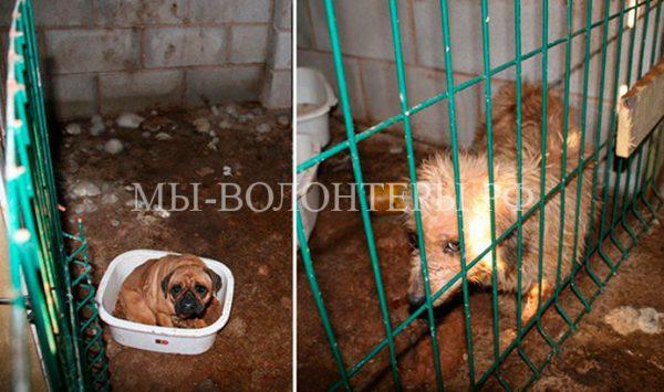 Зоозащитники спасли щенков от недобросовестного заводчика