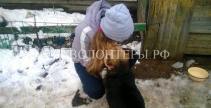 14-летняя школьница и ее приют для бездомных собак «Четвероногий друг»