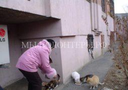 Глава комитета Госдумы по экологии предложил открыть подвалы для бездомных животных