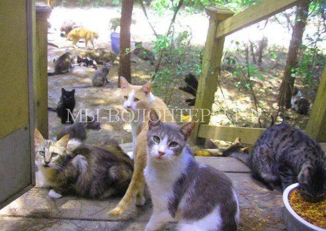 Особую деревню для бездомных кошек решили построить в Турции