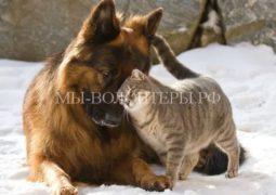 Госдума приняла закон об ужесточении уголовного наказания за жестокое обращение с животными