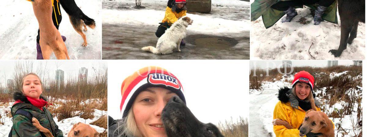Предновогодние прогулки — волонтеры Мария и Дина с подопечными, приют Щербинка