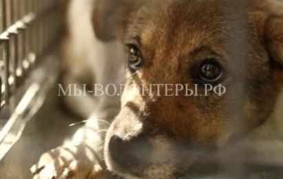 В Заксобрании Ленинградской области предложили создать при МВД зоополицию