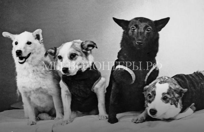 10 собак, вошедших в историю