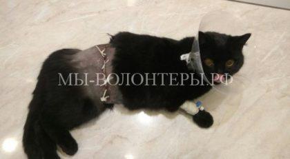 Волгоградские ветеринары спасли кошку со сложным ранением