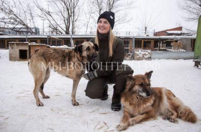 Волонтер из Дании помогает собакам в самарском приюте