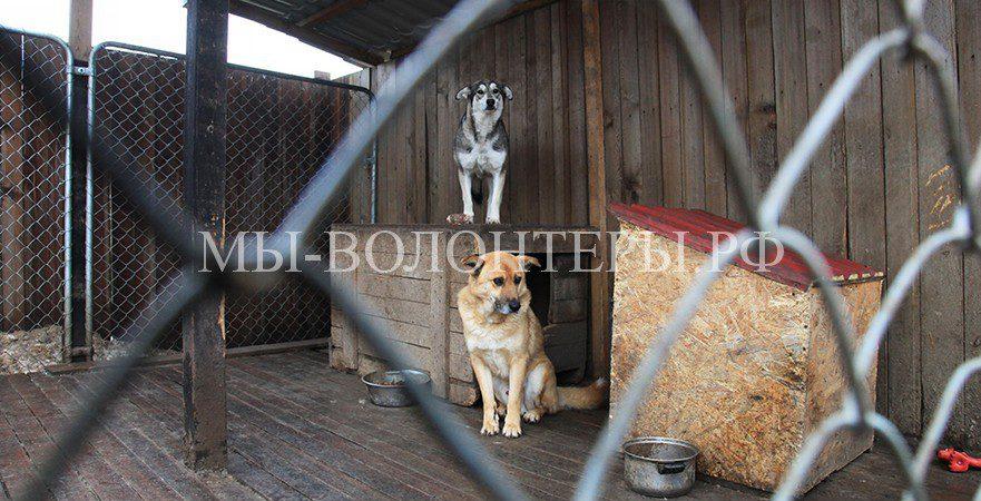 В Калининградской области готовят центры передержки бездомных животных на время проведения ЧМ-2018