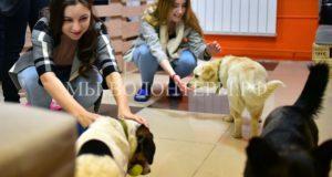 В Новосибирске открылось первое в России песокафе - его обитатели-собаки из приютов