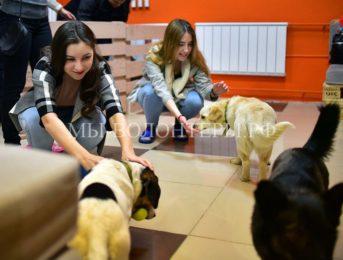 В Новосибирске открылось первое в России песокафе — его обитатели-собаки из приютов