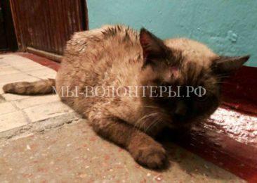 Жители Новосибирска спасают искалеченного кота, выброшенного на мороз