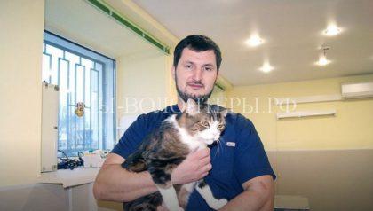 Владимирские ветеринары поменяли коту челюсть, пораженную остеосаркомой