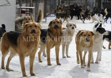 Приют для бездомных собак в Новгородской области получил поддержку из фонда Президентских грантов