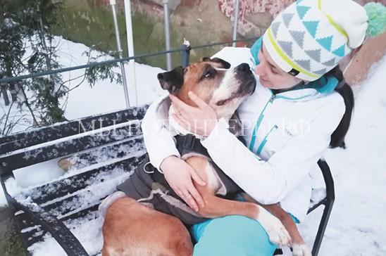 Шанс выжить для брошенных собак «бойцовых» пород