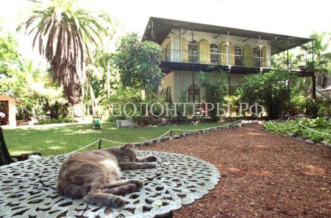 Есть еще места на Земле, где кошки чувствуют себя как в раю