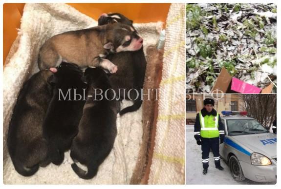 Сотрудники ДПС вВологодской области спасли пятерых замерзающих щенков