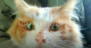 Спасение кота, просидевшего в вентиляционной шахте 5 дней