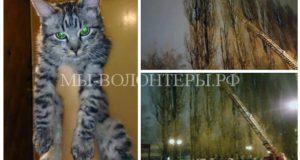 Спасение бездомного котенка с 35-метрового тополя