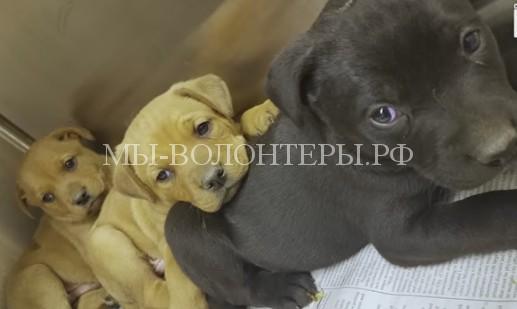 Спасение 10 замерзающих щенков из разрушенного дома