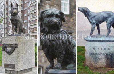 Памятники преданным собакам, которые просто всем сердцем любили своих хозяев