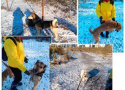 Рождественские прогулки волонтеров со своими  подопечными, приют Щербинка